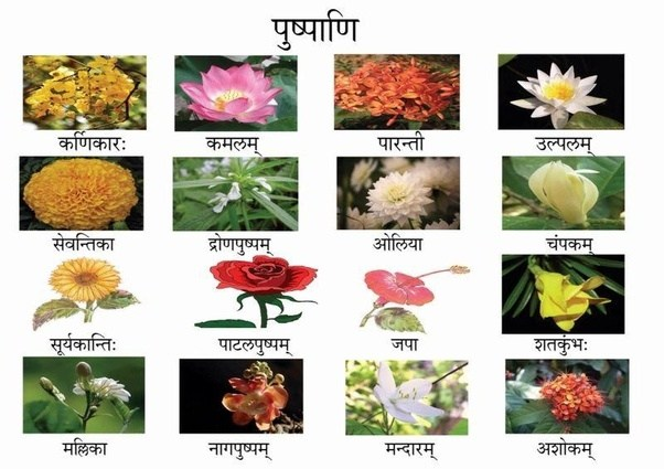What do we call rose flower in sanskrit language quora i am attaching a reference sheet of flower names in sanskrit for your reference mightylinksfo Image collections