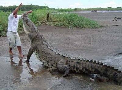 how to take care of a baby crocodile quora