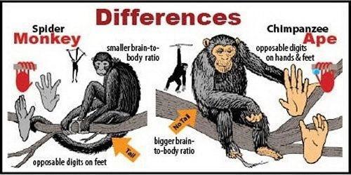 Manusia Itu Gak Berasal dari Monyet
