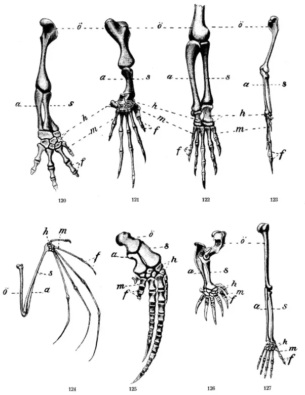 In what way does comparative anatomy explain evolution? - Quora