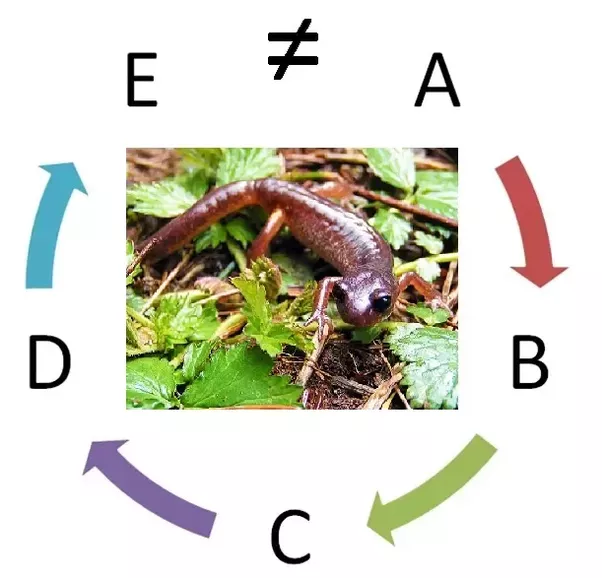 Are great danes and chihuahuas different species quora this diagram is a simplified description of the ensatina ring species ccuart Choice Image