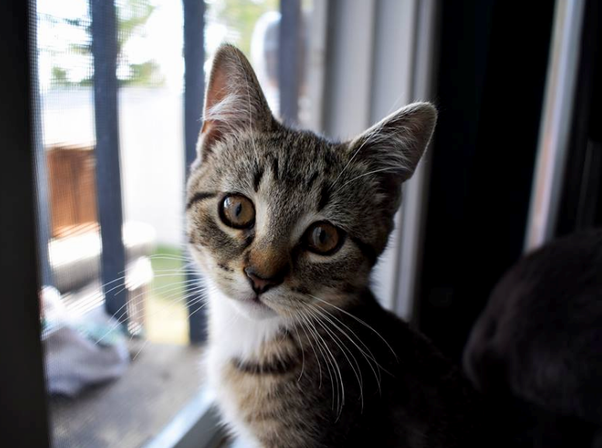 Do Cats Have Brown Eyes If So How Common Is It Quora