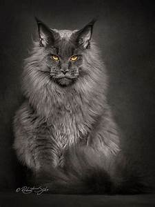 Which Are The Most Attractive Cat Species Quora
