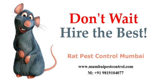 What is the best electronic rodent repellent? - Quora
