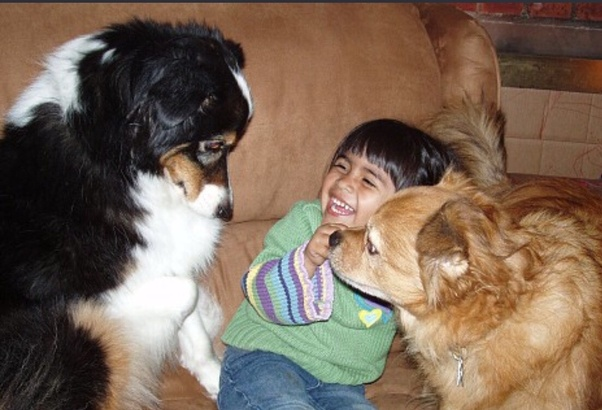 What would you do if someone kicked your pet? - Quora