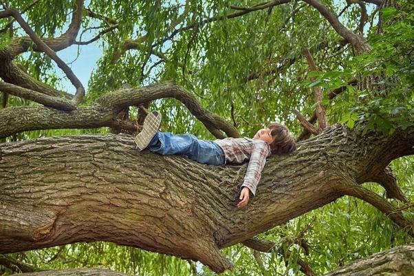 Dormir debajo de un árbol por la noche puede matarte? - Quora
