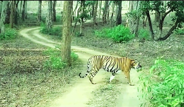 Nagarhole National Park, best and hidden places in India