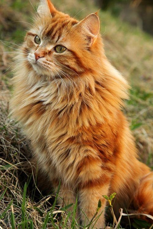 cats with asthma life expectancy