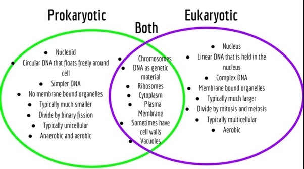 are prokaryotes more complex than eukaryotic cells