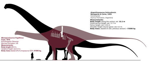 Is the biggest known dinosaur larger than a large blue ...