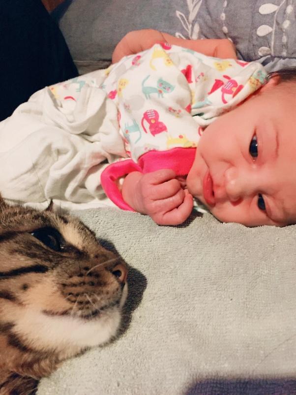 Can cats sense pregnancy? - Quora