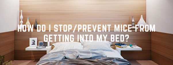 How To Stop Or Prevent Rats And Or Mice From Getting Into My Bed Quora