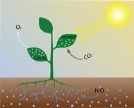 What Are Examples Of Organisms That Do Photosynthesis
