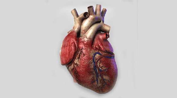 Is it possible to install mechanical heart in human body? - Quora