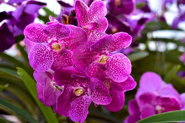 Quais São As Flores Mais Lindas Do Mundo Quora