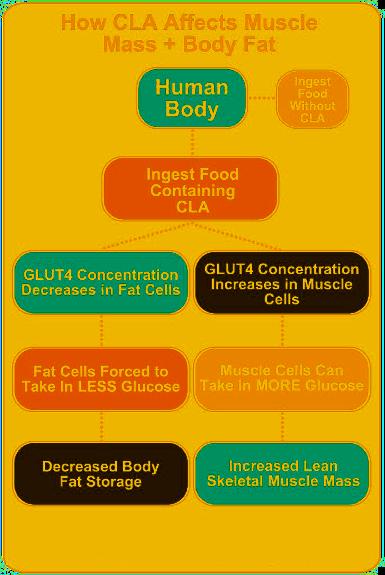 12 week weight loss eating plan pdf