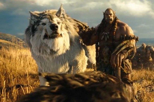 Wolf Vs Bear Fight