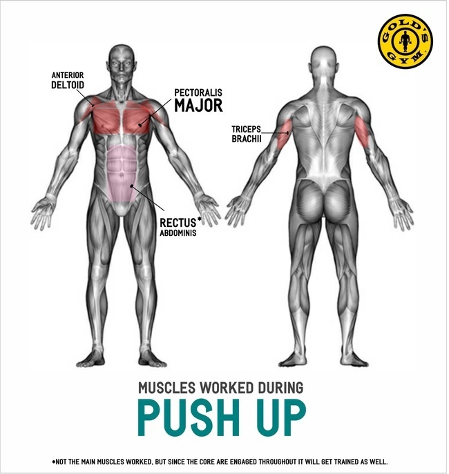 Which Is Better Push Ups Or Pull Ups Quora