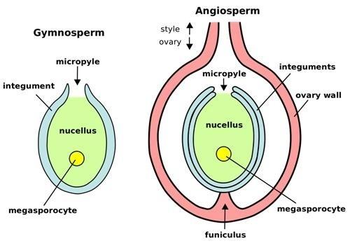Do gymnosperms and angiosperms reproduce sexually
