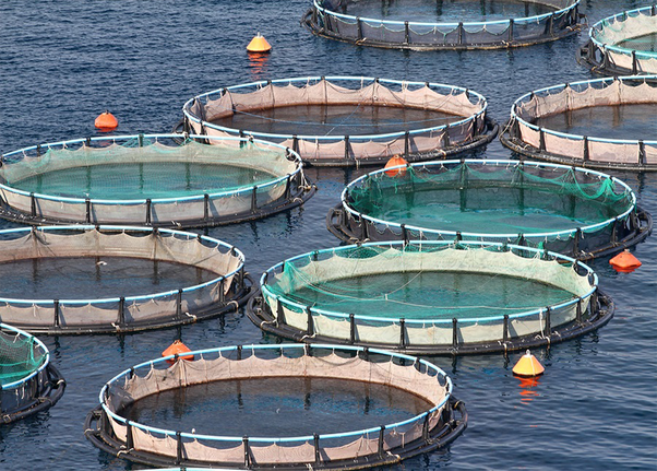 What is the scope of recirculating aquaculture system in