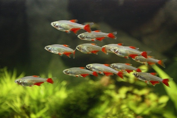 What Aquarium Fish Should I Get Quora
