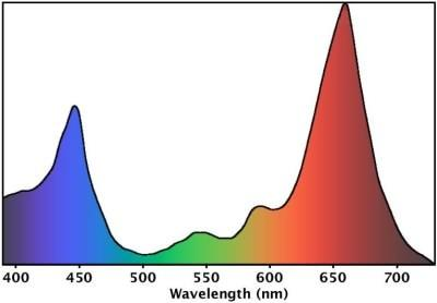 You Can See, The Major Absorption Bands Are Located Around Blue And Red  Regions. Which Means If You Want To Provide A Plant With Light, What You  Really Need ...