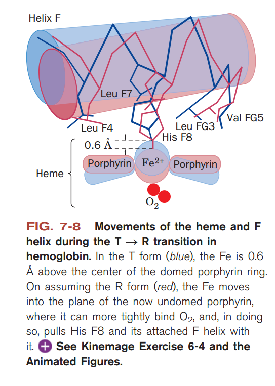 This Below Image May Be A Simplification Just Porphyrin Ring Of Heme No Sidechains But I Think It Works Since The Is Oxygenated And Depicted To