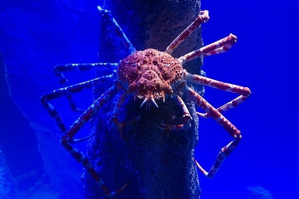 I Personally Consider Marine Arthropods To Be Somewhere Between Frightening And Disgusting Fascinating Interesting But Still