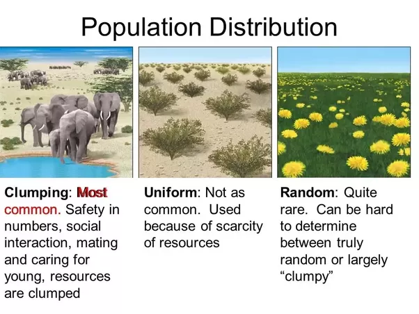 What Is An Example Of Uniform Distribution In Environmental Science