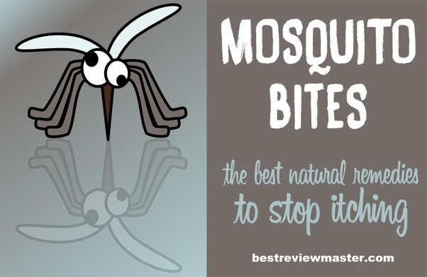 What is a good remedy for mosquito bites, as far as itching