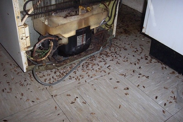 They Ran All Over The Place And Were Thick At Times Everything From Spiders Centipedes Ants Flies Mosquitos Certainly Roaches Also Earwigs