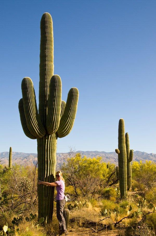 how to describe the different types of arizona cactus quora