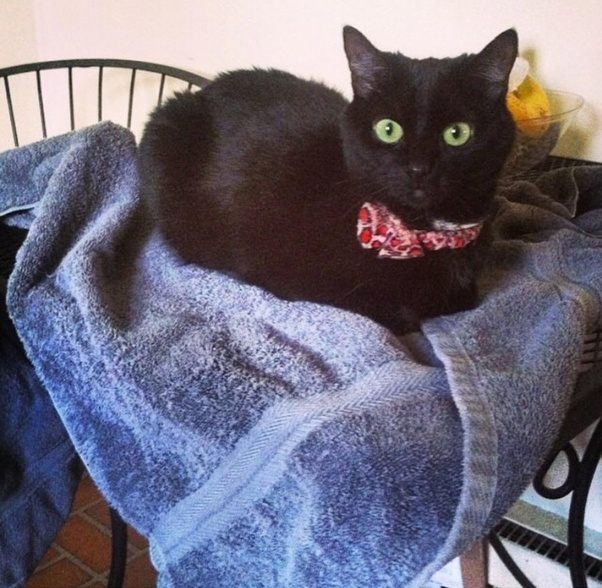 How common are black cats with green eyes Quora