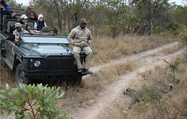 Which country is best for a safari holiday, Kenya or South