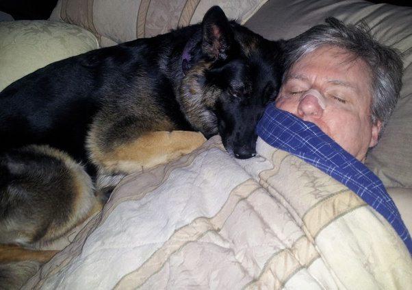 How Do I Spell Good Morning In German : Do german shepherd dogs talk more than other quora
