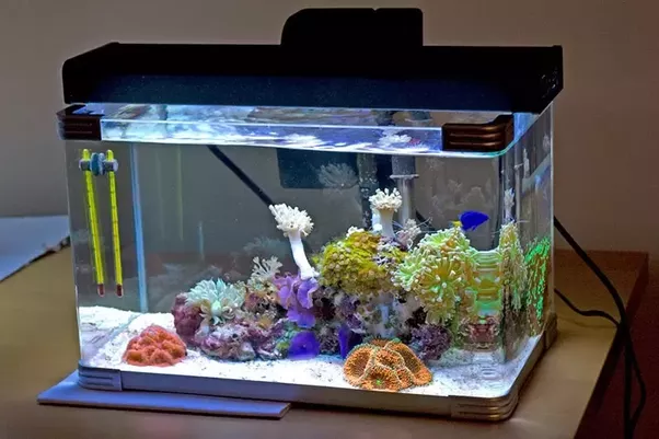What are the basic requirements to set up a nano marine for Aquarium recifal nano