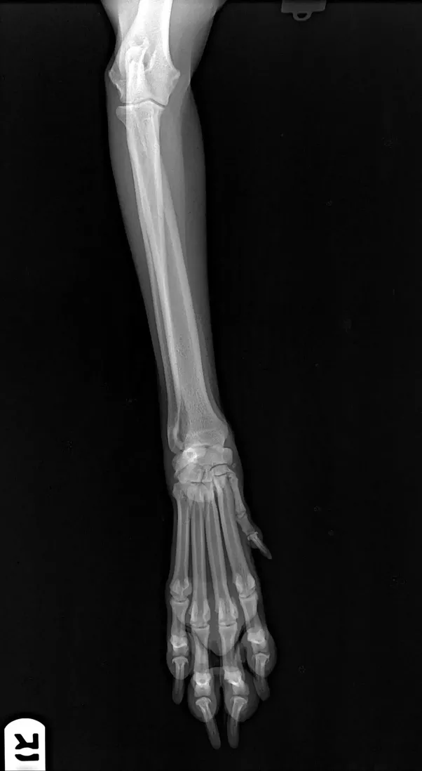 What is the average cost of x rays for a dog quora fortunately somehow my superdog fell 30 feet onto concrete and didnt so much as fracture a single bone my mind was blown and the vets were absolutely solutioingenieria Images