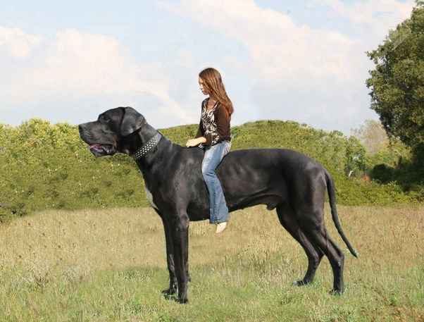 Which Dog Breed Has The Largest Brain Quora