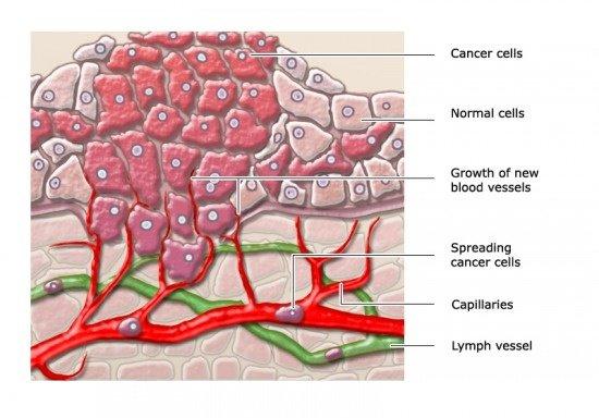 ¿Qué tan rápido se pueden multiplicar las células cancerosas?