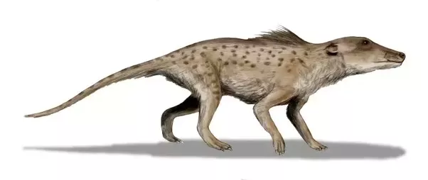 What Are Some Interesting Examples Of Convergent Evolution Quora