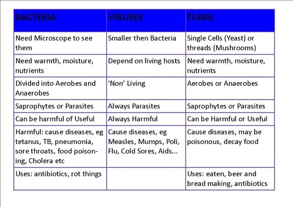 What Is The Difference Between Bacteria Virus And Fungi Quora