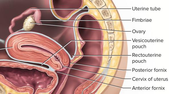 Cos'è questo? Quando ho inserito il dito nella vagina della mia ragazza, poi entro pochi centimetri, ho sentito una struttura cilindrica al centro di essa, dove il mio dito poteva girarci intorno / sotto. Se è la cervice, non è troppo vicino (2-3 pollici)?