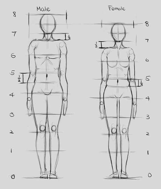 What Does It Mean To Draw In The Natural Proportions Of A Person Quora