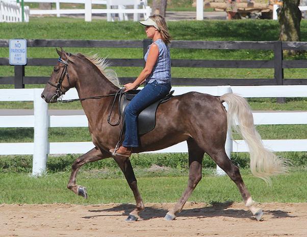 Short Horses Size 8692