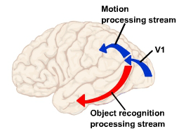 The brain's got rhythm: Extracting temporal patterns from visual input
