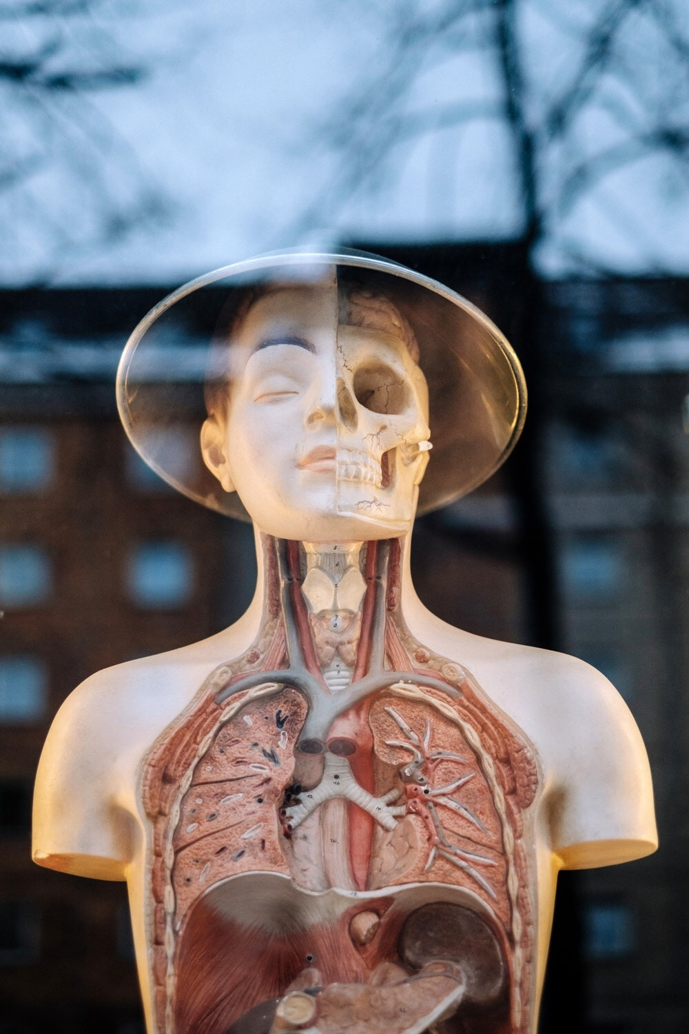 How Should I Read Anatomy Most Effectively In 1st Year Should I