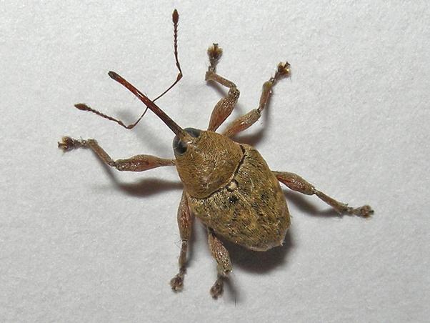 Mal insekt