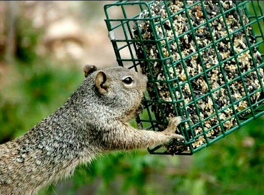 lifehacks keeps bird of to keep r feeder squirrels out how comments a