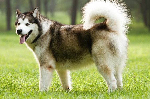 Dog Breeds Are Banned In India Legally