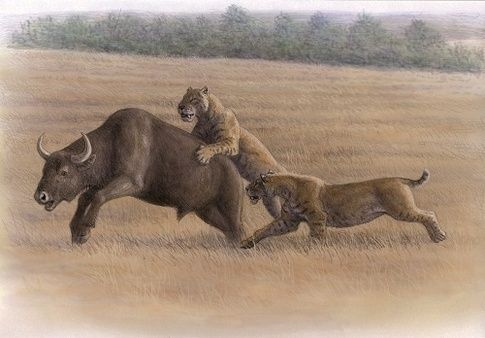 ¿Cuándo (y dónde) se extinguieron los últimos gatos con dientes de sable (Machairodontinae) en Europa?